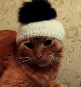 Отдам котика