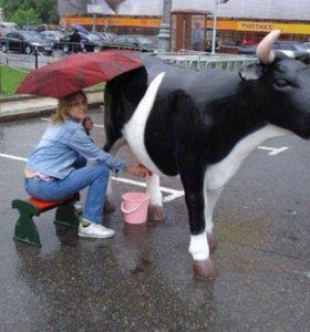 Дойная корова аттракцион