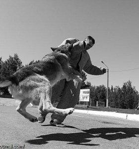 Профессиональня дрессировка собак