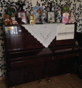 Пианино за шоколадку😻
