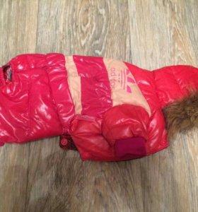 Теплый костюм на маленькую собачку