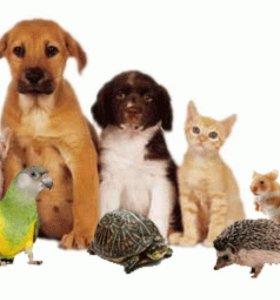 Передержка животнах