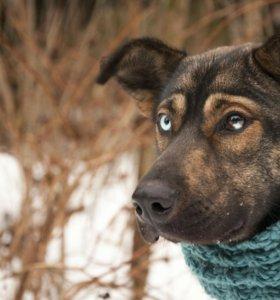 Необычная собака в дар