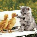 Цыплята, утята, гусята, индюшата.