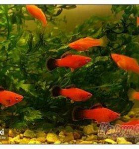 Рыбки, Растения