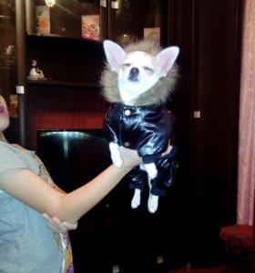 Одежда маленькой собачке