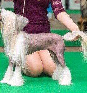 Груминг. Стрижки собак разных пород .