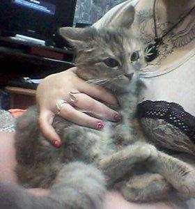 Кошечка в хорошие руки