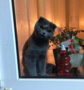 Кошечка ищет котика