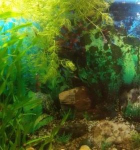 Рыбы,улитки,растения