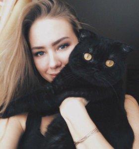 Вязка. Шотландский вислоухий котик на вязку
