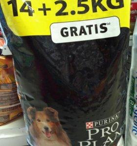 Про План для собак средних пород 14+2.5кг