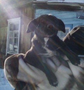 Собакен ищет дом