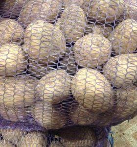 Картошка Галла качество на 100% 89116923333