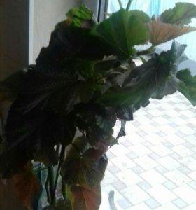 Комнатное растения.