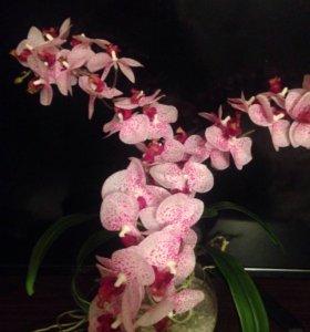 Композиция в стекле Орхидея