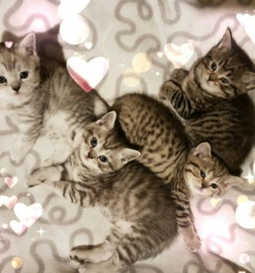 Вискасные котята