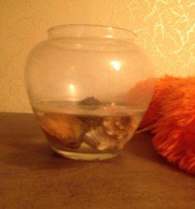 Краб с аквариумом