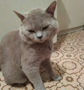 Котик ждет на вязку