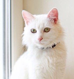 Белая кошка в добрые руки