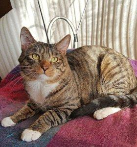 Отдам котика Барсика, 1 год серого полосатого. Гла