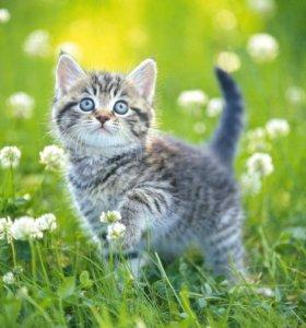 Котенок даром