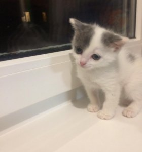 Отдам котёнка! (Мальчик)