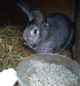 Кролик 6кг 9месяцев