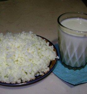 Молочный (кефирный) гриб