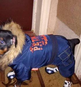 Тёплый комбинезон для собачки