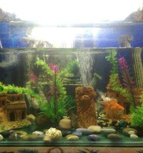 Рыбки +аквариум +декорации+подставка