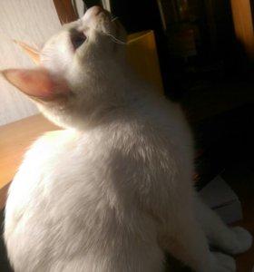 Котенок 3-месячный