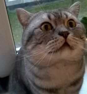 Коты вязка в кемерово