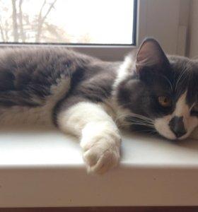 Котёнок Степа ждёт своих хозяев!!!