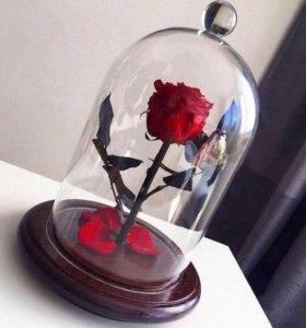 Стабилизированная роза ,  роза в колбе
