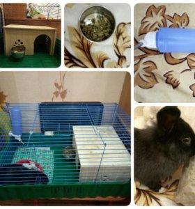клетка,поилка,кармушка,домик,кролик девочка
