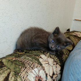 Котик ищет дом
