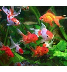 Аквариумные рыбки!!!