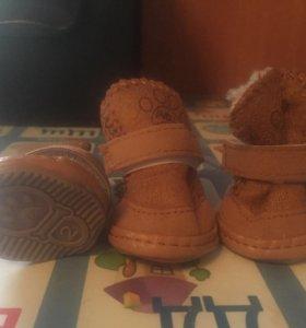 Обувь на маленькую собачку