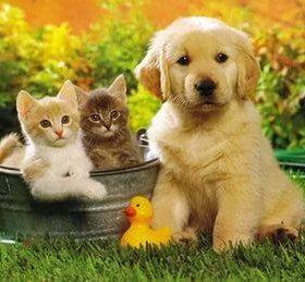 Передержка собак и кошек.