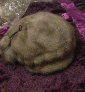 Шапчулька норковая