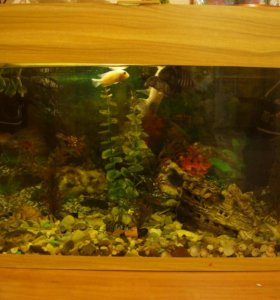 Аквариум для рыбок