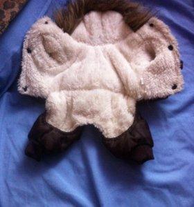 Курточка для собаки чихуахуа