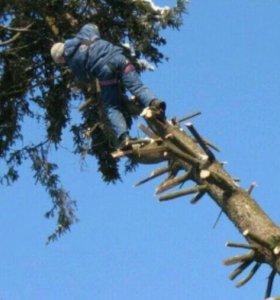 Удаление деревьев, обрезка и лечение.