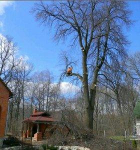 Удаление аварийных деревьев, обрезка.