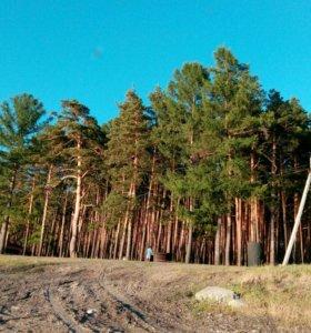 Лес на корню