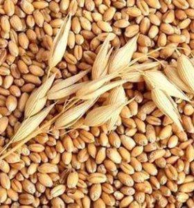Овёс , ячмень, пшеница