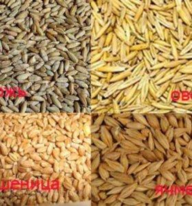 Овес, пшеница, ячмень и комбикорма.