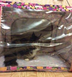 Кошачий павильон для выставок, продажи котят