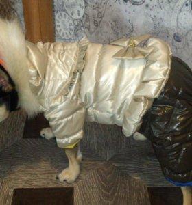 Куртка для средней собаки